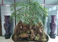 河南省豪来市政园林工程有限公司企业形象