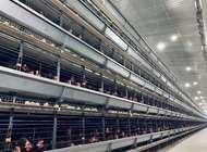 自动化蛋鸡养殖设备企业形象
